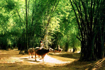 Peaceful moments in Phong Nam help you ease your mind.