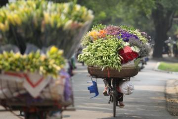 Hanoi 12 flower seasons