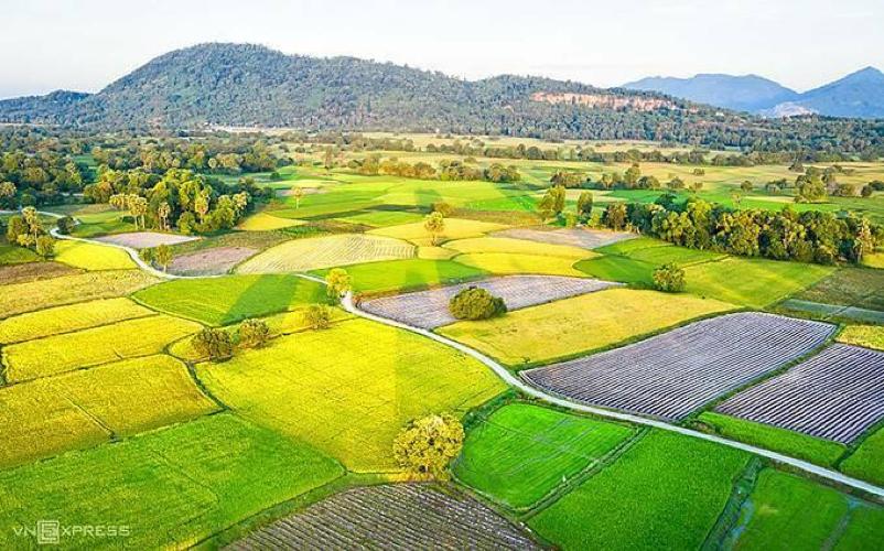 Ta Pa Rice Field – An Giang